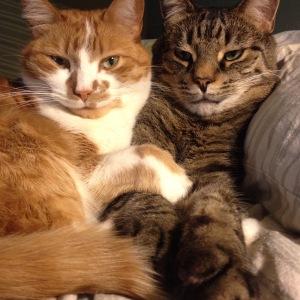 My kitties, whom I love meditating with.