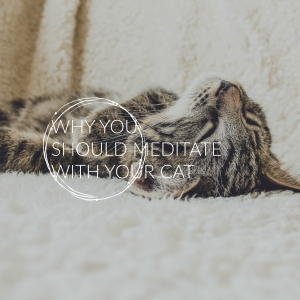 Why you should meditate with your cat - ElsieLane.com